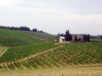 View of Chianti